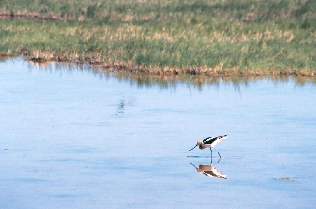 Wildlife Habitat Assessment
