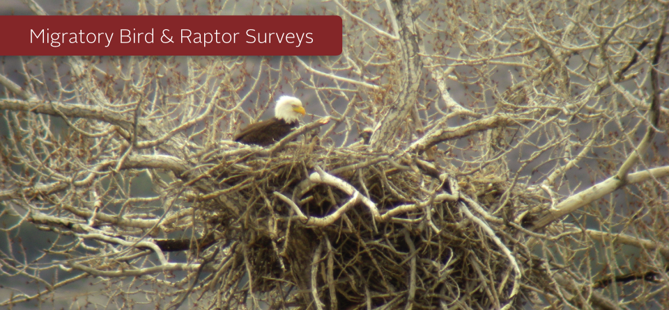 Migratory Bird and Raptor Surveys