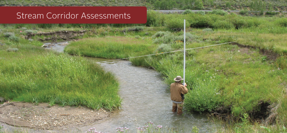 Stream Corridor Assessments