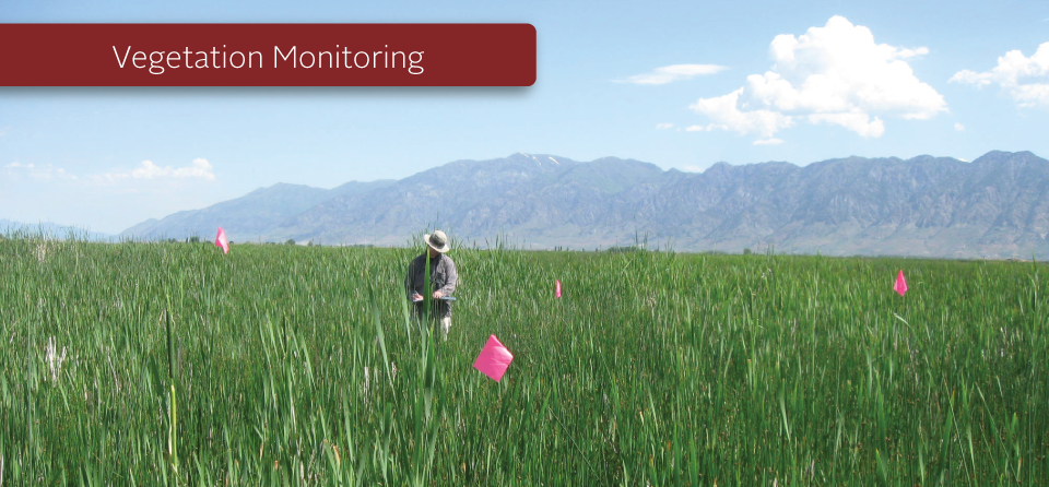 Vegetation Monitoring